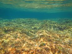 Fish, Mallorca - 2015.