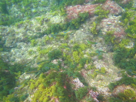 Camouflaged Fish, Tenerife - 2017.